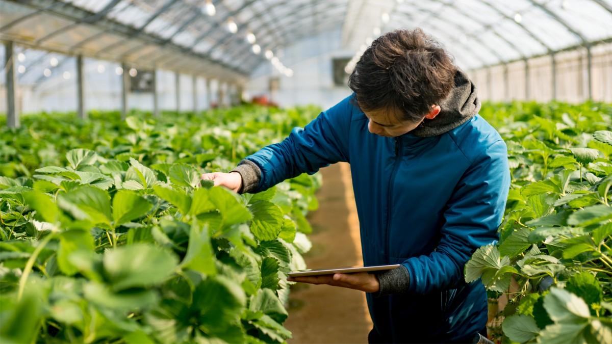 Comercializarea legala a produselor agricole de catre micii producatori